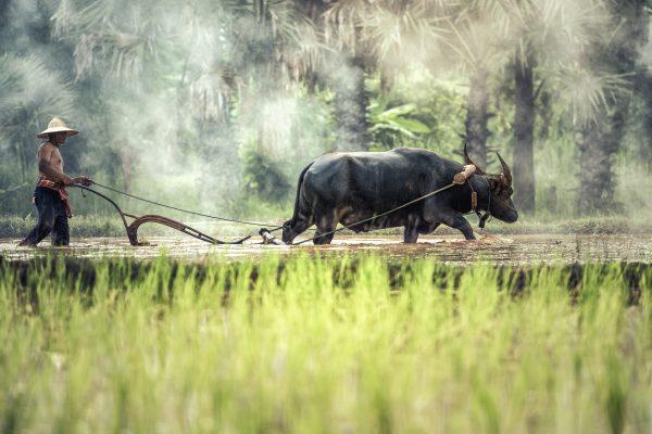 buffalo-1822574_1920